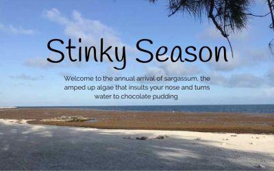 Key West stinks. Record-setting 2021 seaweed turns waters' edges to sludge